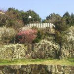 山登りで体も頭皮も健康に!『六甲山~梅林公園の巻』